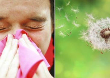Things to Know About Pollen Grains | Pollen Allergy Symptoms ,Types ,and Treatments
