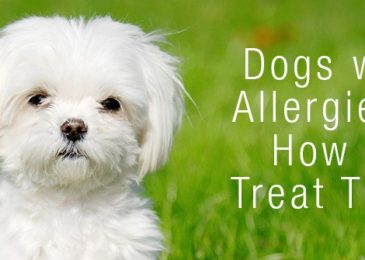 Dog Allergy Testing: How To Tell If your Dog Is Allergic ? (Symptoms & Treatments)