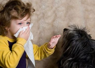 Pets Allergy [Symptoms,Causes,Treatment , and Tips To Avoid It]