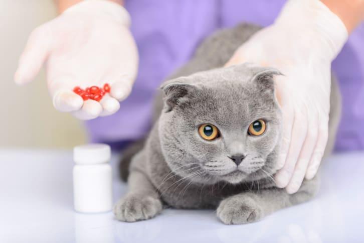 cat Medications