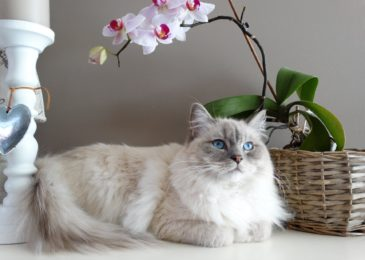 Types Of Allergies In Cats (8 Most Common Causes)