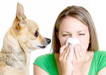 Allergy to dogs : Explanations and Advice