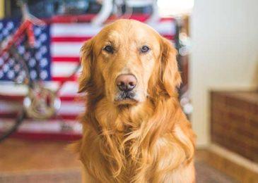 Dermatitis & Environmental Allergies in Dogs (Atopy)