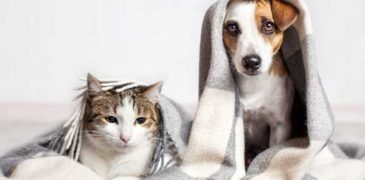 Reducing Pet Allergens In Your Home
