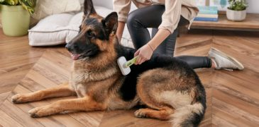 Allergies In Pets That Cause Hair Loss And Its Appropriate Treatment